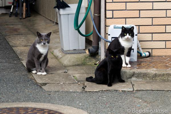 猫の島・相島 04