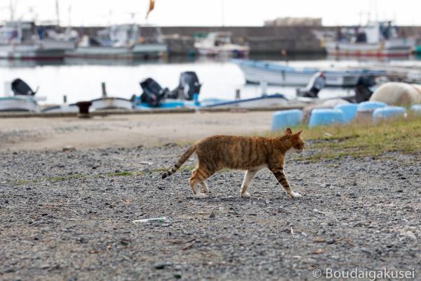 猫の島・相島 05