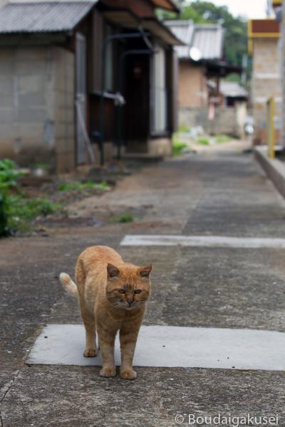 猫の島・相島 06