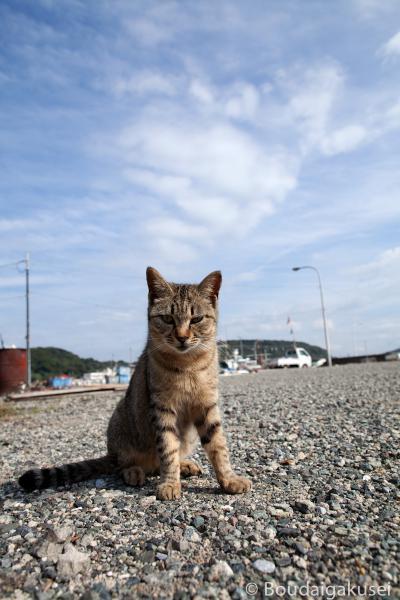 猫の島・相島 07