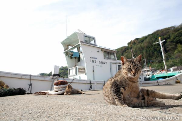 猫の島・相島 08