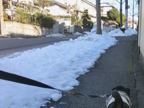 130119雪