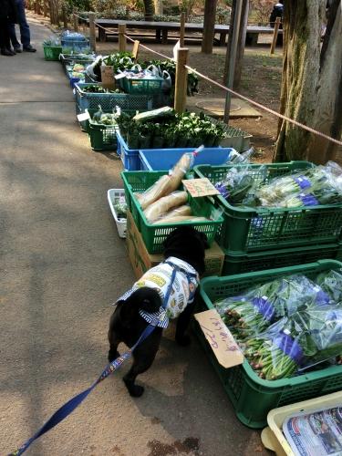 130310野菜♪