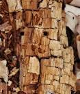 木材の腐りCAOGYB7M