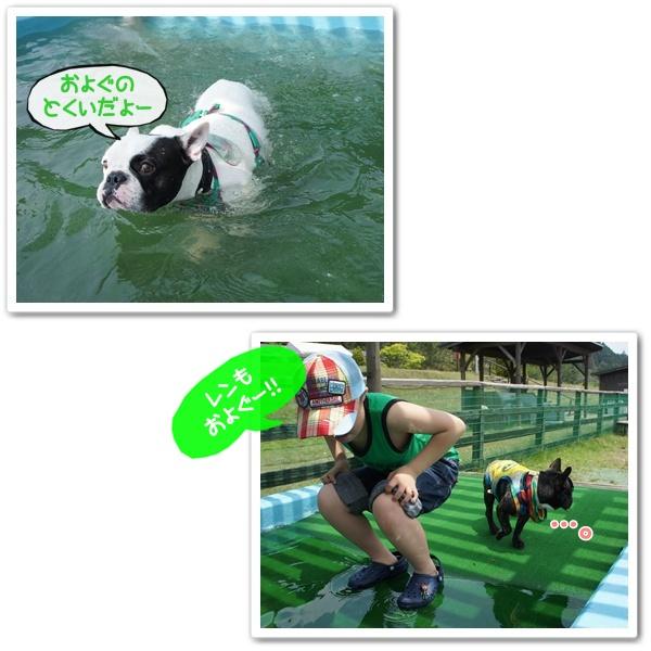 泳いでるよ!