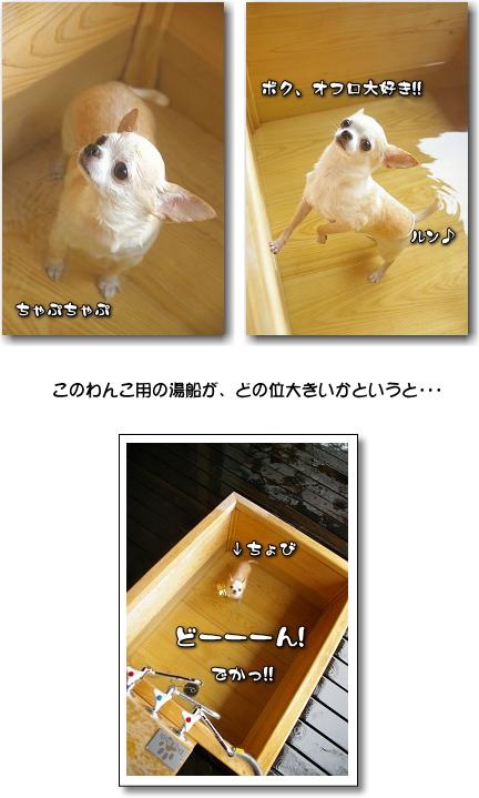 5_20100719052948.jpg