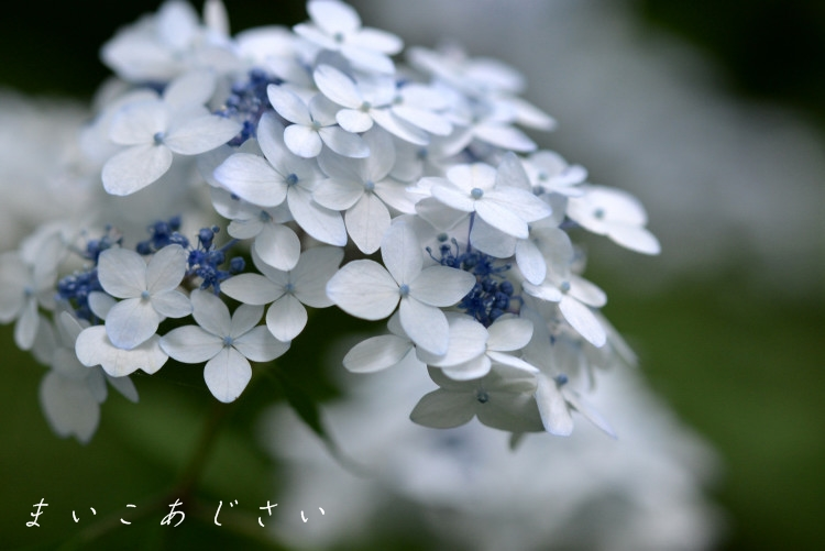 DSC_7035_01.jpg