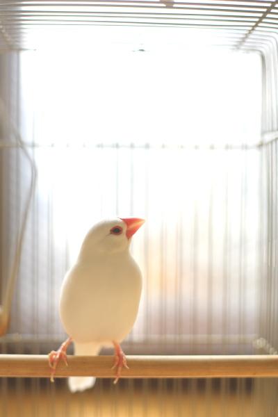 fuyu no taiyouwa uresii