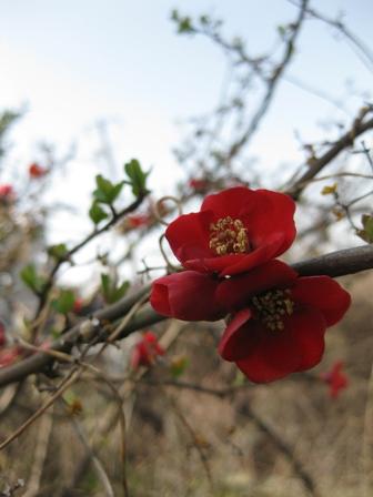 blog_赤い花130310