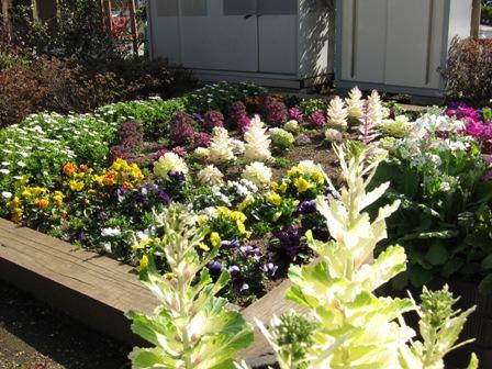 blog_環七のところの花壇140310