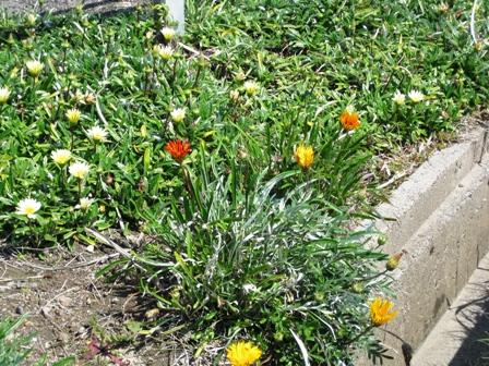 blog_湿地の花270310