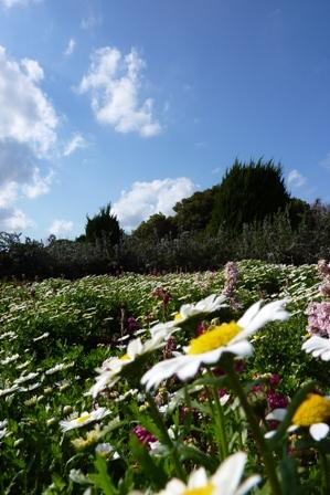blog_ローズマリー庭園270310