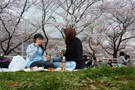 blog_桜の木の下でランチ030410