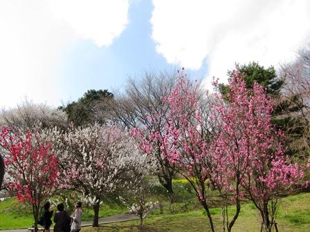 blog_梅かな030410