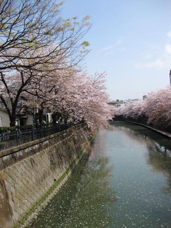 blog_大岡川の橋からの眺め100410