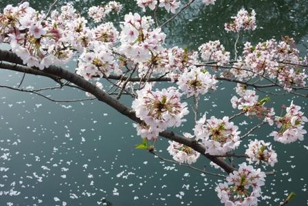 blog_行きにも見た桜100410