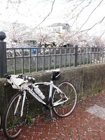 blog_自転車と桜100410