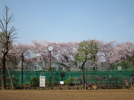 blog_梅ヶ丘の桜110410