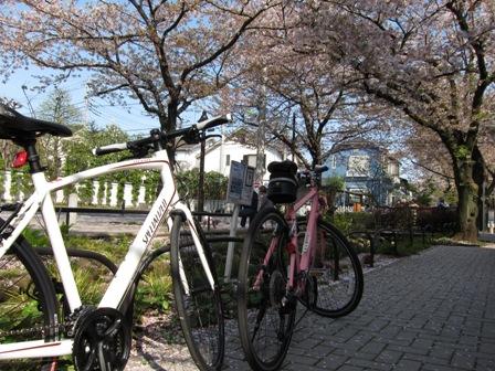 blog_愛車と桜100410