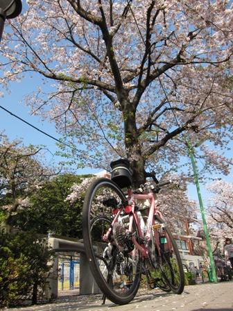 blog_花の色とマッチしてる110410