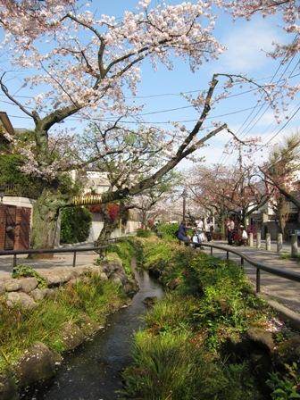 blog_川と桜110410