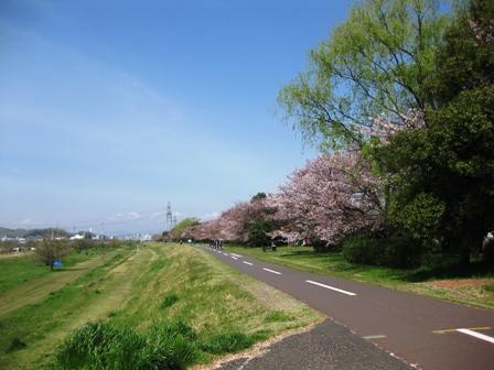 blog_多摩サイも桜が残ってた240410