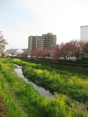 blog_野川180410