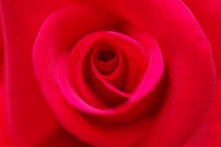 blog_マクロな赤いバラ200610