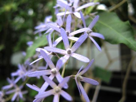 blog_紫のきれいな花260610