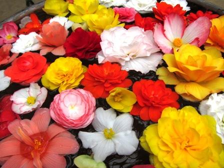 blog_水の上の花260610