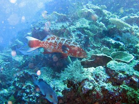 blog_赤い魚090910