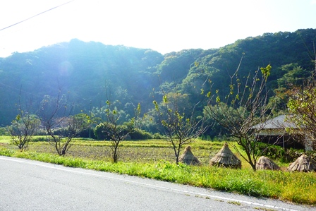 blog_里山へ続く道061110