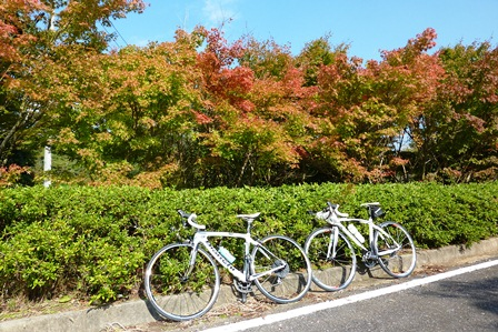 blog_自転車ともみじ061110