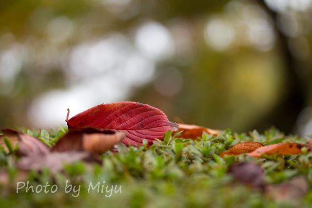 blog_桜の葉201110