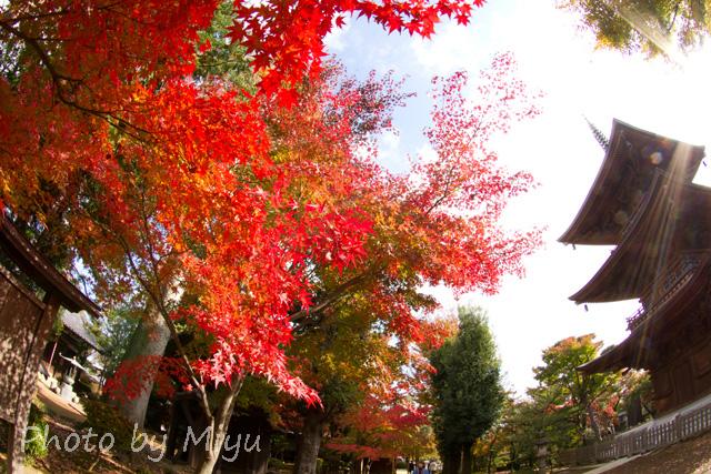 blog_太陽さんさん201110