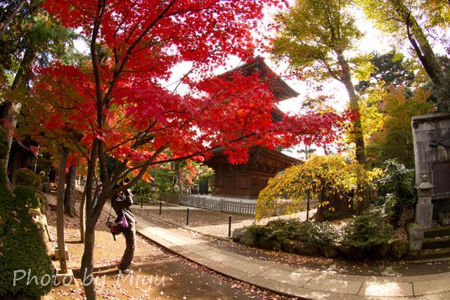 blog_ぐんにゃり201110