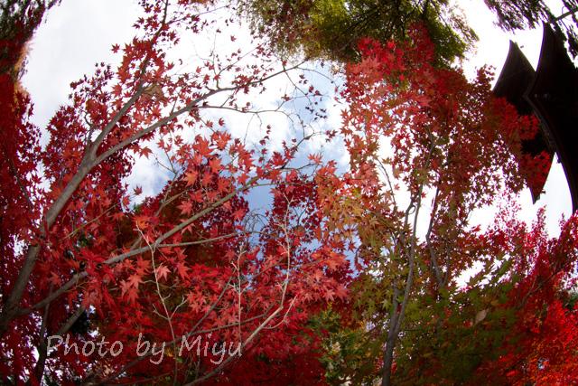 blog_渦巻き201110