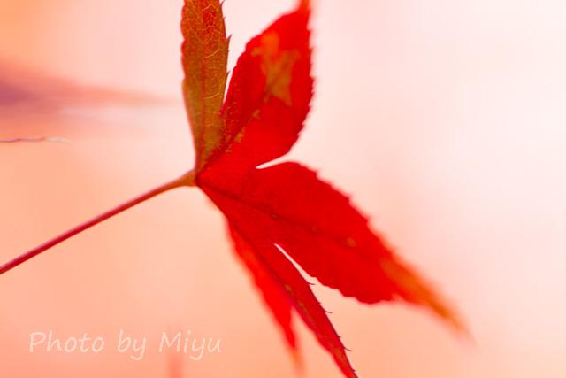 blog_お花みたい201110