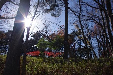 blog_遊歩道沿いの林231210