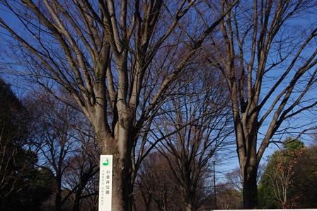 blog_小金井公園231210