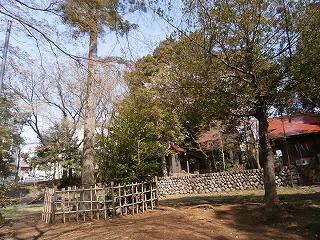 日吉神社神木
