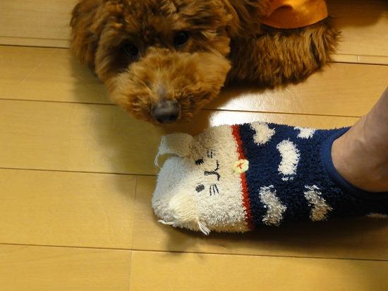 130323動物靴下の耳を狙うマッキー