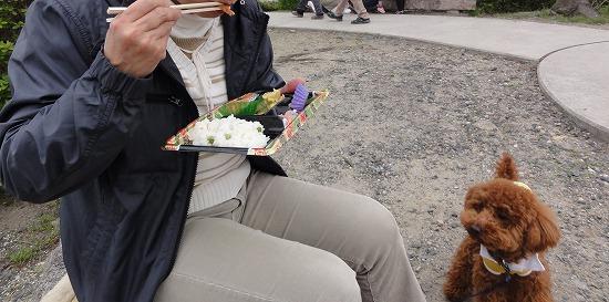 20130331僕も食べたい花見弁当