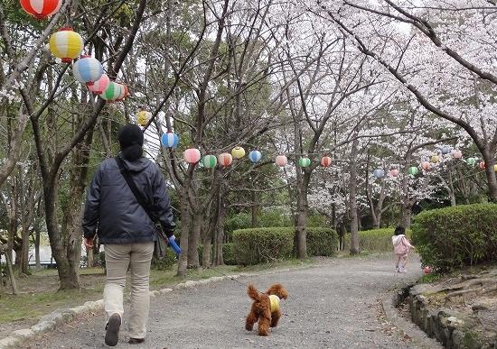 20130331気持ちいいね桜並木