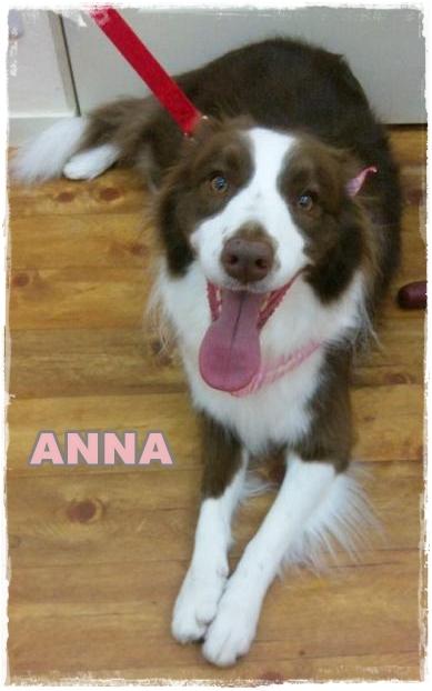 anna1.jpg