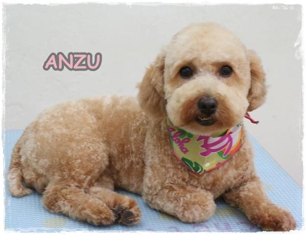 anzu7.jpg
