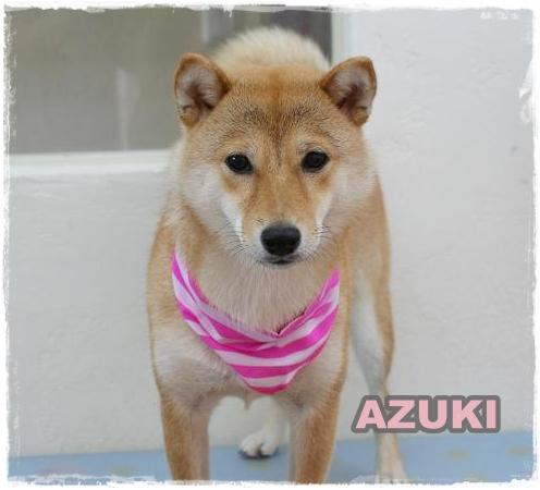 azuki3_20110727090444.jpg