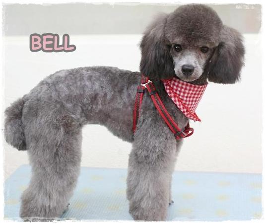bell7.jpg