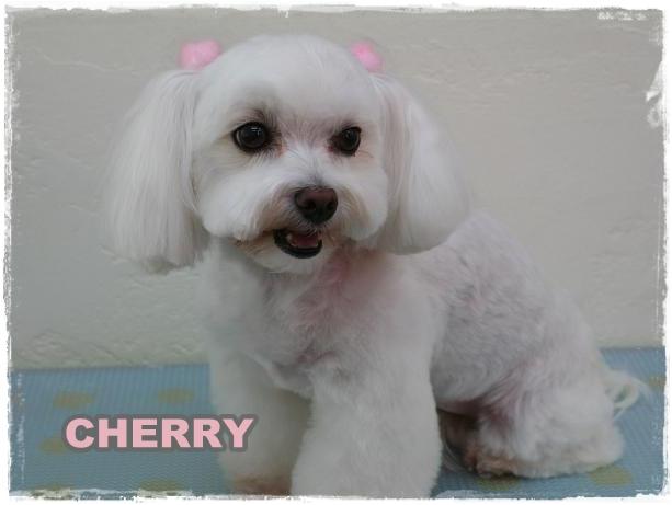 cherry7.jpg
