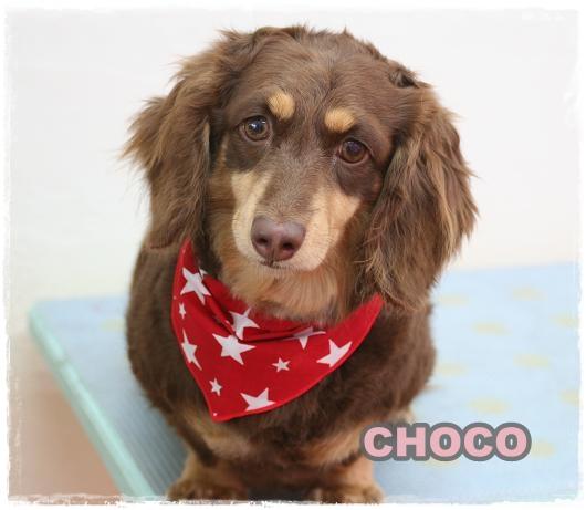 choco5.jpg